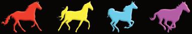 Reiten und Pferde